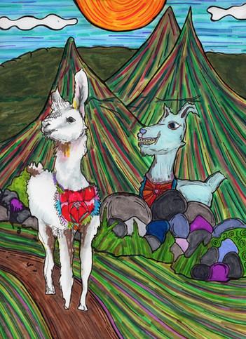 courting llamas