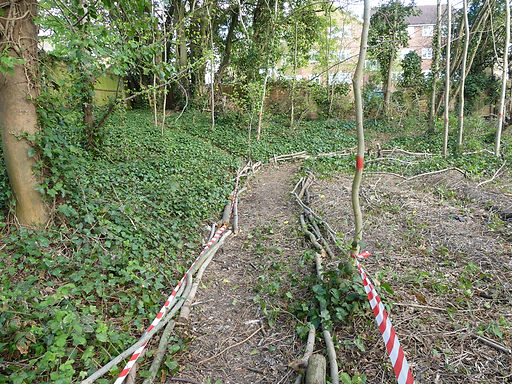 Path being prepared in Orchard