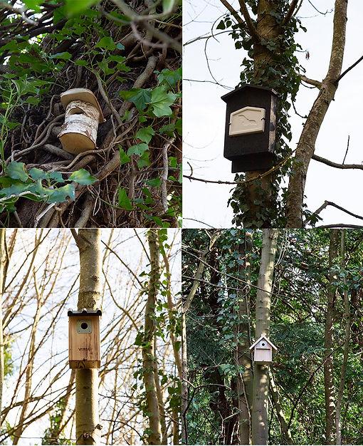 Bird box montage