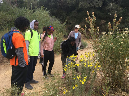 pollination, bridgeview trail, environmental education