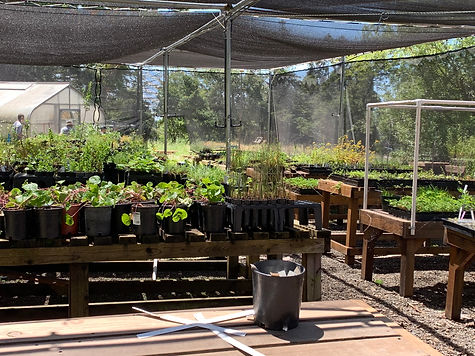 nursery, native plants, california natives