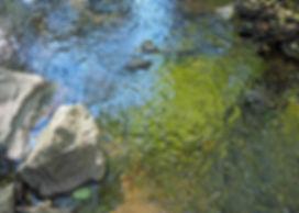 Sausal Creek Reflections I - Hi Res.jpg