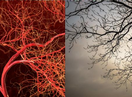 Mikrosirkulasjon og Bemer-terapi