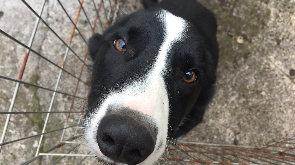 Meet & Greet - Border Collie - Aaron - West Kirby - Fe's FURnomenal Pet Service  Wirral