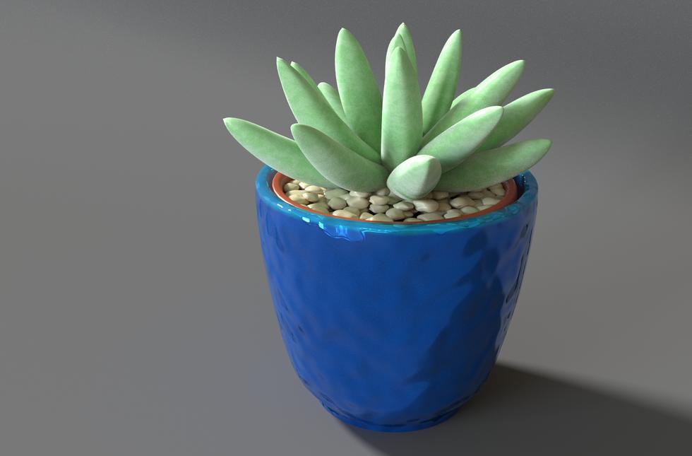 Succulent7.png