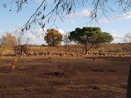 Parc de volailles 2