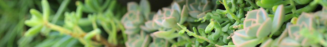 Shed planta