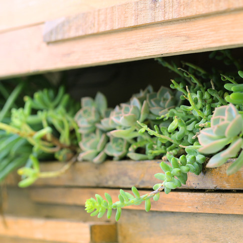 Herb Garden Cookery