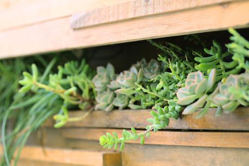plante paris porte d'orléans