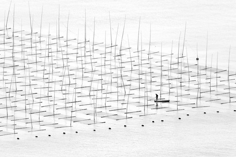 Farming the sea by Tugo Cheng.Hong Kong.