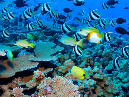 Decade of climate breakdown saw 14 per cent of coral reefs vanish
