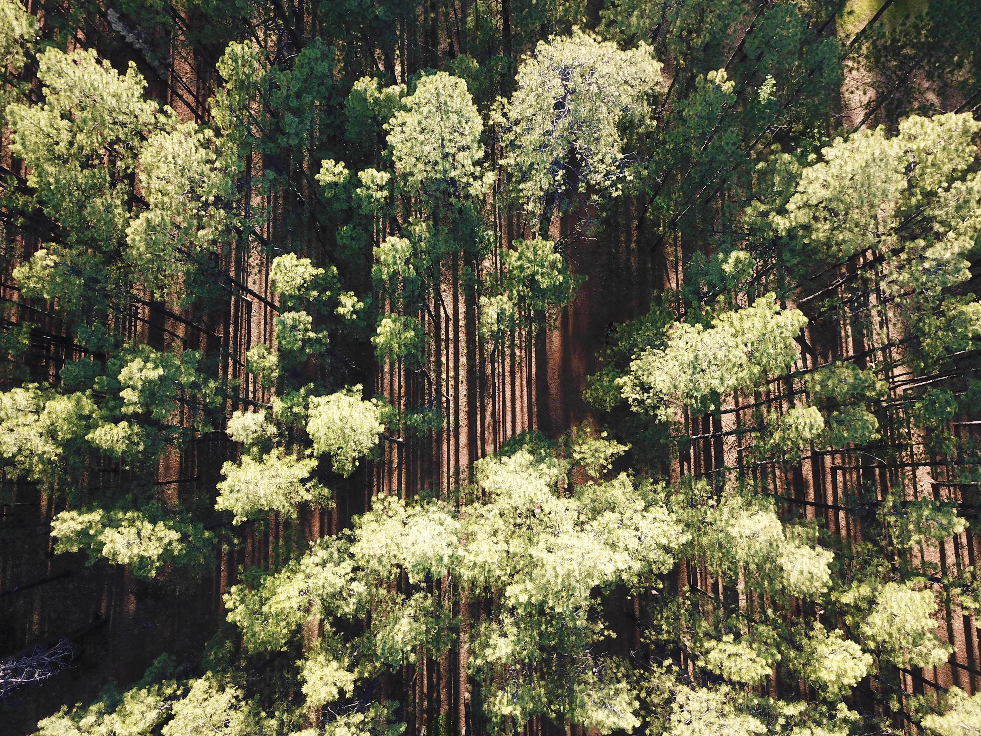 Verticle forest