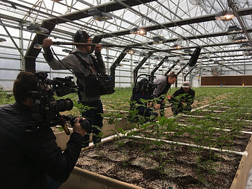 Film crew working in a cannabis greenhouse, Humboldt County