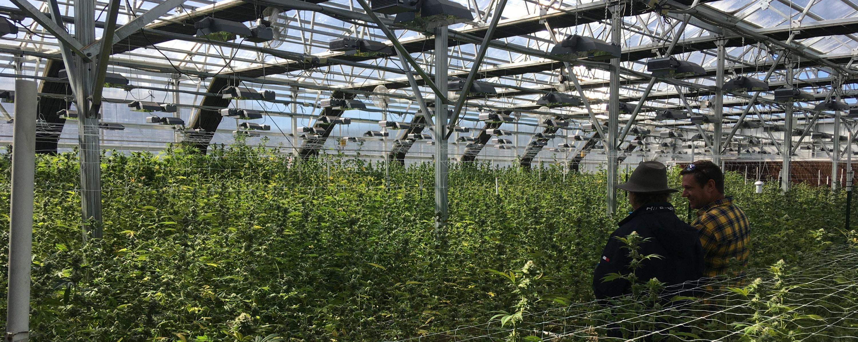 High Tech Cannabis Greenhouse