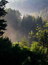 Background image with misty trees in the sunshine