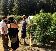 Cannabis Tour Guide with guests and plant