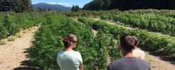 Cannabis Tourists survey a field