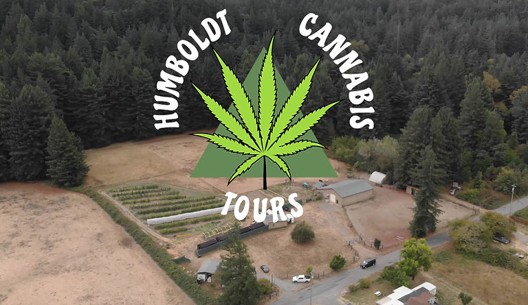 A short video showcaseing our cannabis farm tour. It shows guests walking through feilds of cannabis and eating lunch in the Redwoods.