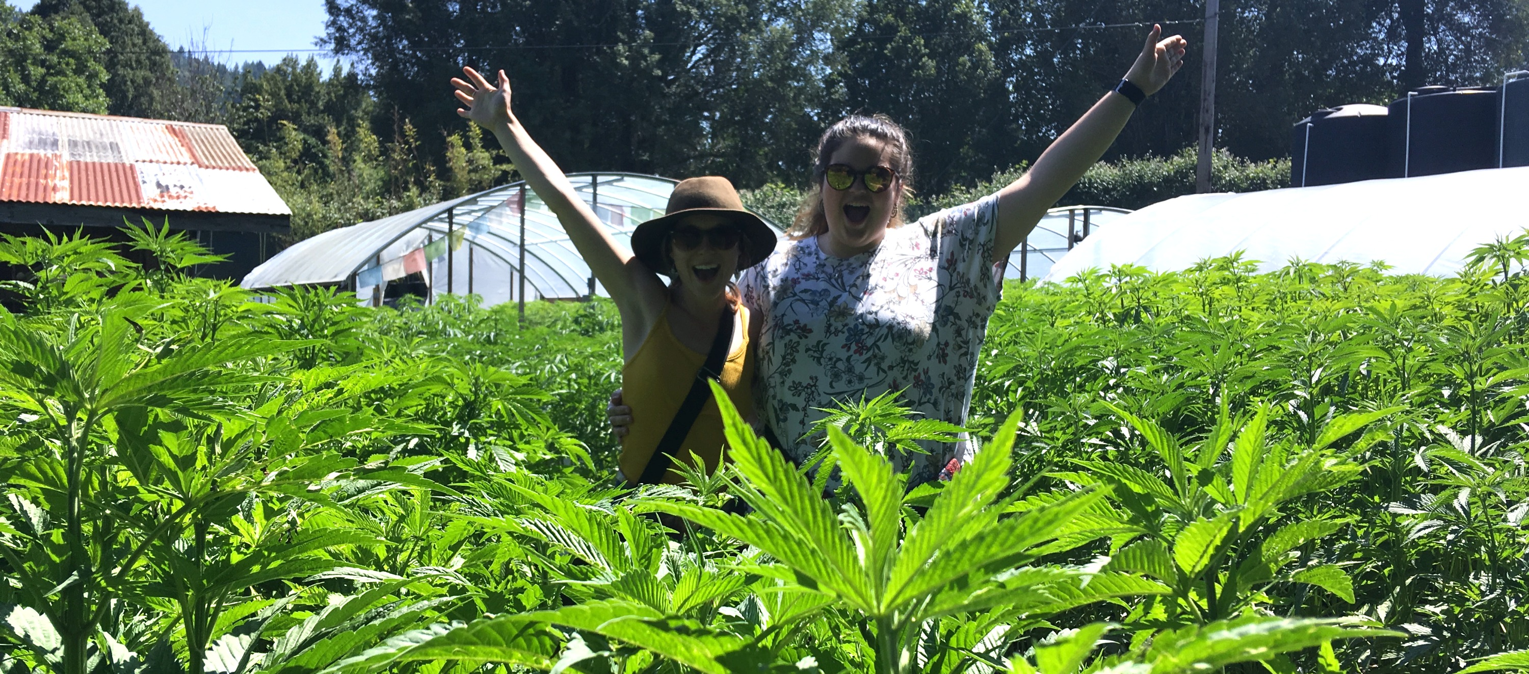 Friends at the Cannabis Farm