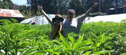 Friends at the Cannabis Farm