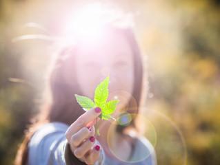 Introducing Humboldt Cannabis Tours