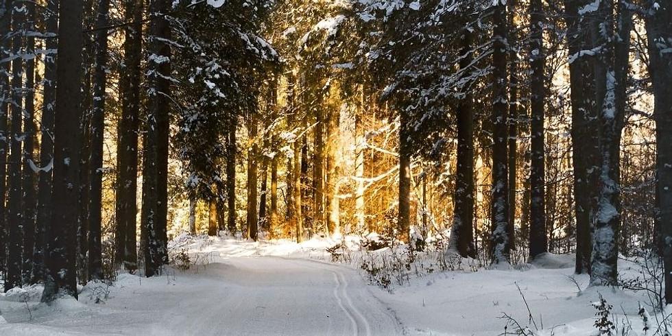 Raue Nächte, klare Tage - bewusst in der Zeit zwischen Weihnachten und Neujahr