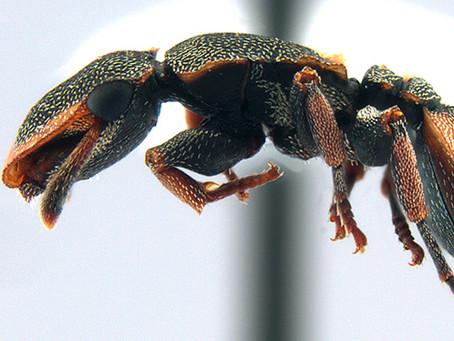 Hormigas de México: ¿Quiénes son y dónde están?