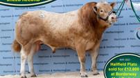 Hallfield Plato sets new breed record