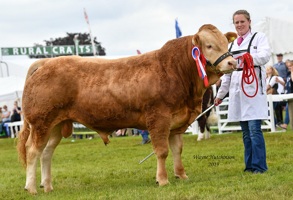 Junior Champion Newland Omaha