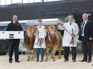 Pedigree Calf Fair Beef Expo NI