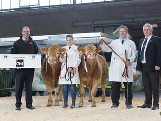 Pedigree Calf Fair Beef Expo NI