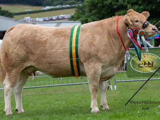 Felltop Joyce takes second Supreme championship at the Welsh Show