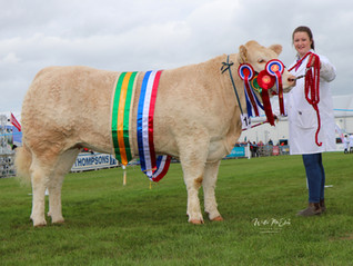 Sweeting smelling success as Hillhead Rose clinches Blonde Championship.