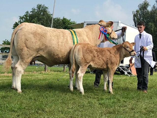 Supreme interbreed champion Samoht Ivy at Hertfordshire country show