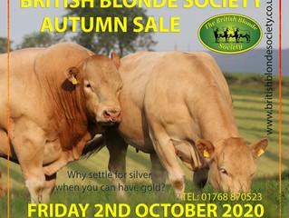 Autumn Bull Sale