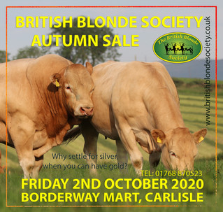 Autumn Bull Sale