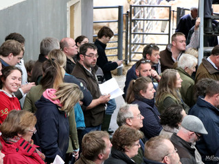 ''A fitting end'' as Kinaston Greylace tops the market at 5100gns.