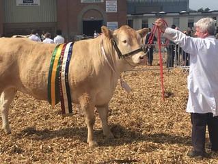 Doncombe Blondes lead the way at Devon County Show