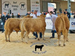 Pedigree Calf Fair, N.I