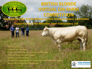 Everything you need to know about 'The British Blonde Virtual On-Farm Competition'