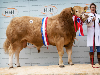 May Show & Sale, Carlisle, Bulls top at 5.500gns