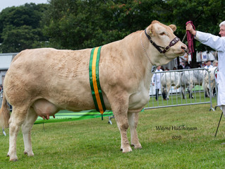 Doncombe Madhu takes Reserve Interbreed Championship at Royal Welsh