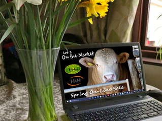 ''On the Market''- H&H to host 'On-Line Pedigree Sale'