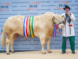 Brownhill Noel takes top price in the Blonde Spring Daffodil sale