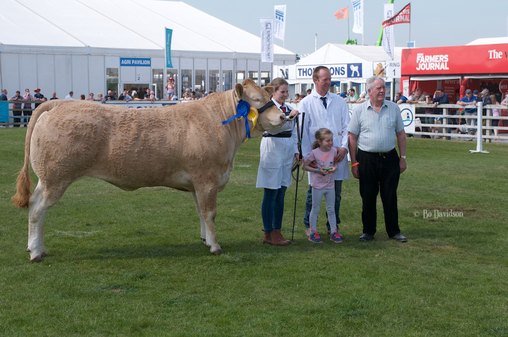 Best Senior Heifer:Drumnafern Legacy