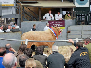 Autumn Bull Sales
