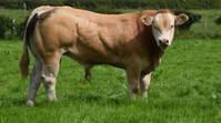 Virtual on-farm competition, Class 6, Calf born in 2020