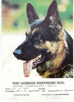 German+Shepherd+2.jpg