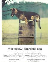 German+Shepherd.jpg