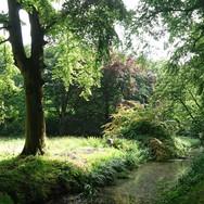 oostvoorne bos.jpg